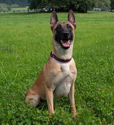 Atreyu, Qualitätsmanager bei AktivDog Hundefutter